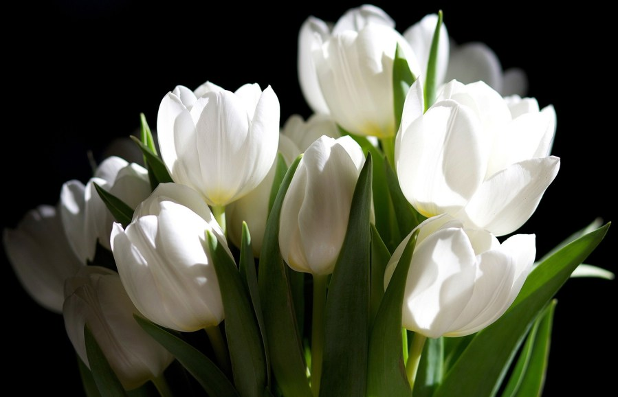 Free photo  White Flower   White  Plant  Bloom   Free Download   Jooinn     White Flower 58 Free Wallpaper   HdFlowerWallpaper com