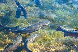 Fish farming business in Kenya