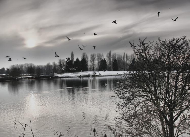 sunset-billing-lake-by-cynthia-berridge