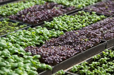 lancaster-pa-commercial-agricultural-farm-photographer-jordan-bush-photography-12 Agriculture