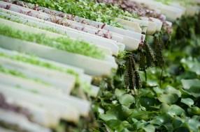 lancaster-pa-commercial-agricultural-farm-photographer-jordan-bush-photography-18 Agriculture