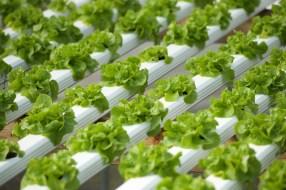 lancaster-pa-commercial-agricultural-farm-photographer-jordan-bush-photography-3 Agriculture