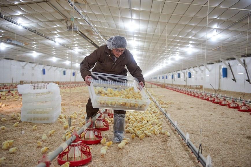 Central_Pennsylvania_Organic_Agriculture_Lancaster_PA_Food_Farming_Transportation_Commercial_Photographer_Jordan_Bush_02 Agriculture