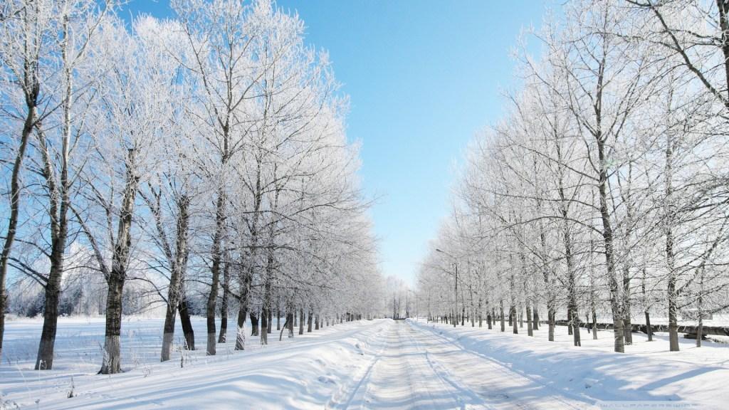 Winter Favorites