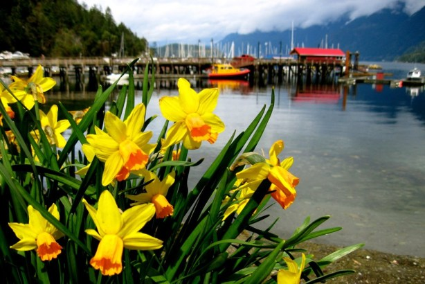 Daffodils and sailboats