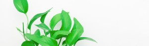 close up of office plant and white background. Laura Jordan at Jordan Therapy services is excited to work with you in your journey. Try online therapy in texas or online therapy in indiana.