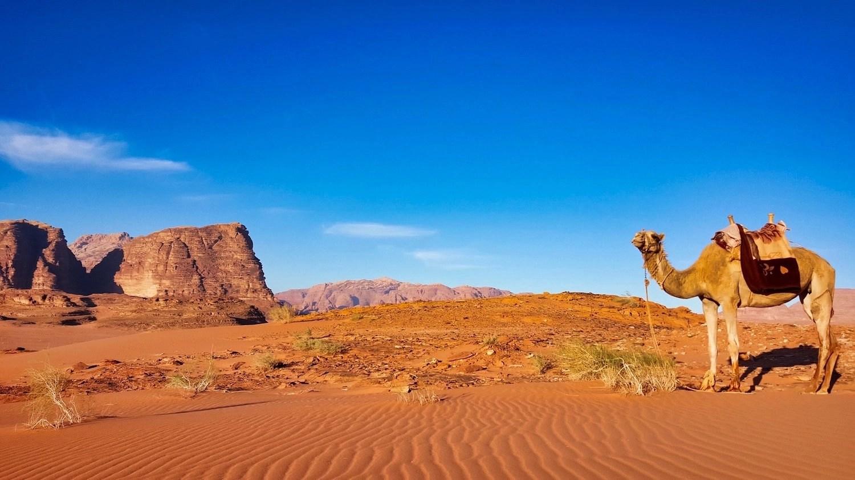 10 Days in Jordan - Camel in Wadi Rum