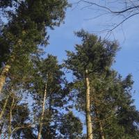 Træer og skove i nyt lys