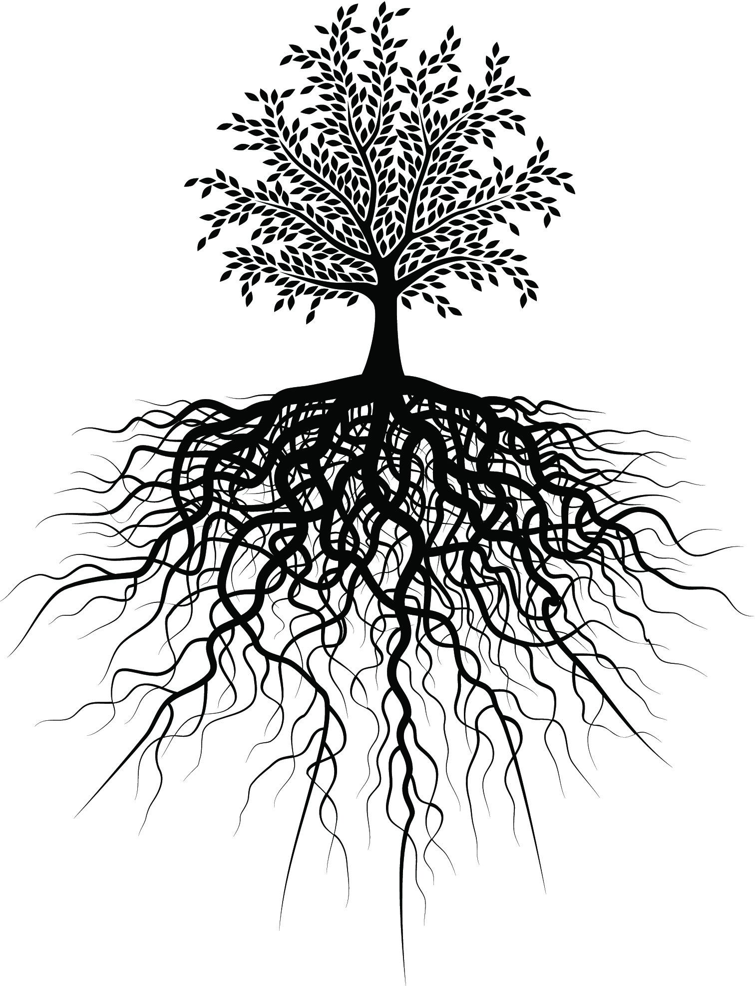 Tree Big Roots