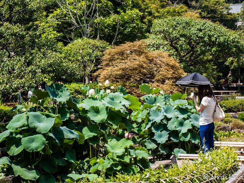 HISTORIA DE UNAS VACACIONES EN TOKYO (VII): KAMAKURA (1ª parte)