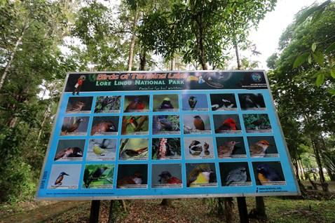 Jenis-jenis burung yang ada di Hutan Lindung Lore Lindu, Kab. Poso-Sulawesi Tengah