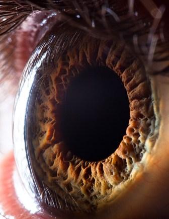El diseño aparentemente perfecto del ojo tiene su origen en nuestro antepasado con sensibilidad fotorreceptiva leve, el cual mediante selección natural y con el suficiente tiempo geológico daría lugar al ojo actual pasando por imnumerables pasos previos.