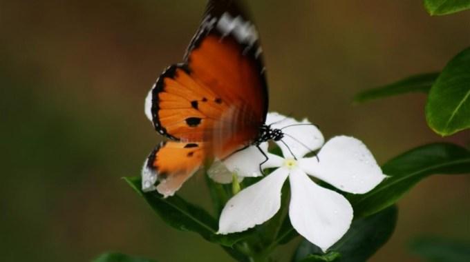 La Mariposa De Alas Mojadas