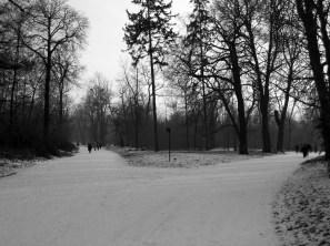 Le_bois_de_Vincennes_en_noir_et_blanc_sous_la_neige_janvier_2009