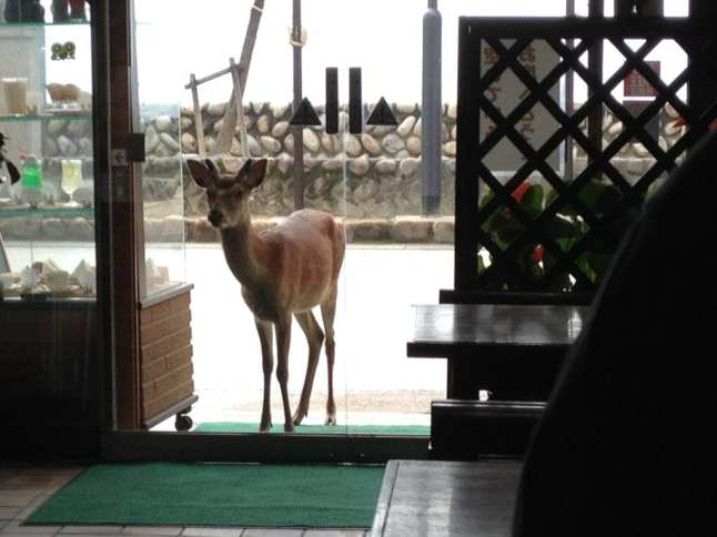 Deer at Restaurant. Photo Credit: Susan Spann. Used with permission.