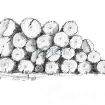 Holz 2 (Bleistift)