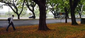 São Paulo precisa tratar melhor suas árvores, defende especialista