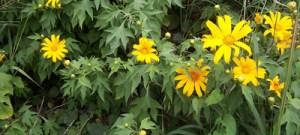 "Estudo revela como ambiente influencia ""princípios ativos"" das plantas medicinais"