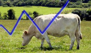 Lançada nova edição de boletim sobre economia e ciência animal