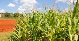 Brasil não deveria importar etanol de milho