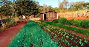 Agricultores familiares poderão contar com empréstimos durante crise