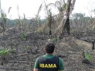 Fiscal do Ibama analisa área desmatada ilegalmente. A ação faz parte da operação