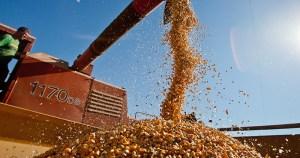 Produção de grãos ultrapassa a marca de 226 milhões de toneladas em 2017