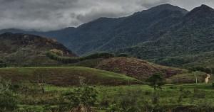 Brasil tem muitas espécies de plantas em risco de extinção