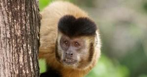 Estudo com macacos sugere que cultura e biologia caminham juntas