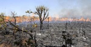 Ação humana ainda é a maior causadora de incêndios florestais no Brasil