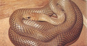 Guia ilustrado traz estudo sobre serpentes na Caatinga