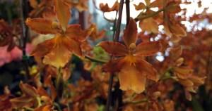Pesquisadores descobrem detalhe que permite a fecundação das plantas