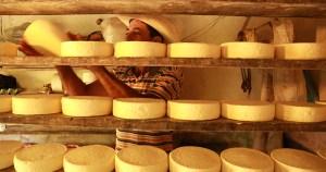 Pesquisadores da área de queijos artesanais podem participar de rede de estudos