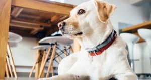 Aumento de pena para maus-tratos aos animais pode desestimular prática