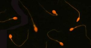 Fumar maconha deteriora qualidade de espermatozoides