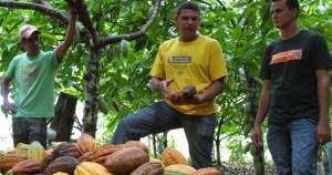 Dá para viver bem de agricultura familiar na Amazônia
