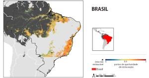 Mapas identificam melhores regiões para restaurar florestas tropicais; Brasil lidera hotspots para recuperação