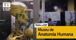 Visite a USP: museu permite viajar pelo corpo humano