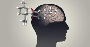 Canabinoide pode ser efetivo para combater fase inicial do Alzheimer