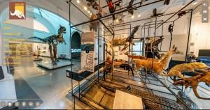 Museu de Zoologia da USP inaugura tour virtual 360