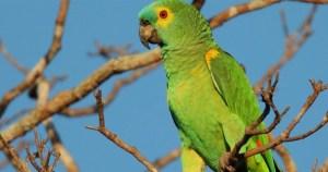 """O """"book"""" das aves de Santos: guia traz fotos e informações em livro digital"""