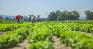 Brasil só tende a ganhar com adoção de agricultura sustentável