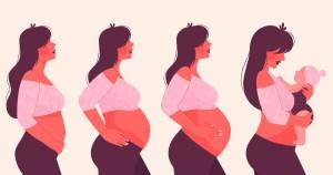 Idade gestacional: pesquisa mostra como cada dia na barriga impacta no desenvolvimento do bebê