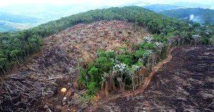 Áreas desmatadas por mineração ilegal na Amazônia aumentam em 90%