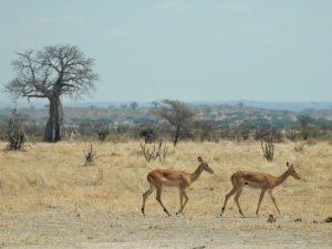 O meio ambiente no continente africano