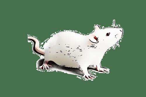 Rato-de-Laboratório_M