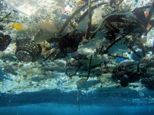 Contaminação oceânica atinge a saúde humana