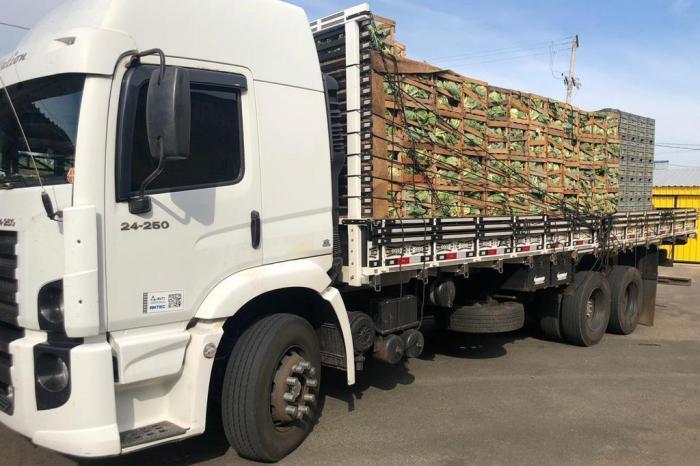 PRF flagra caminhão transportando 331kg de cocaína em meio à verdura