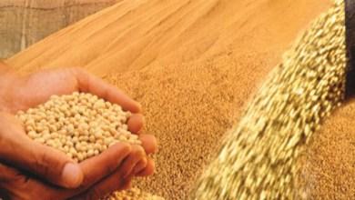 Photo of Conab aumenta para 193,8 milhões de toneladas estimativa para safra de grãos