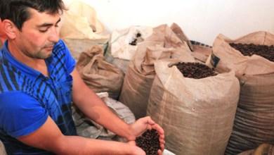 Photo of Chapada: Governo debate caminhos sustentáveis para a cafeicultura em Barra da Estiva